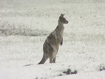 it does snow in Australia (Photo Credit - Skippy)